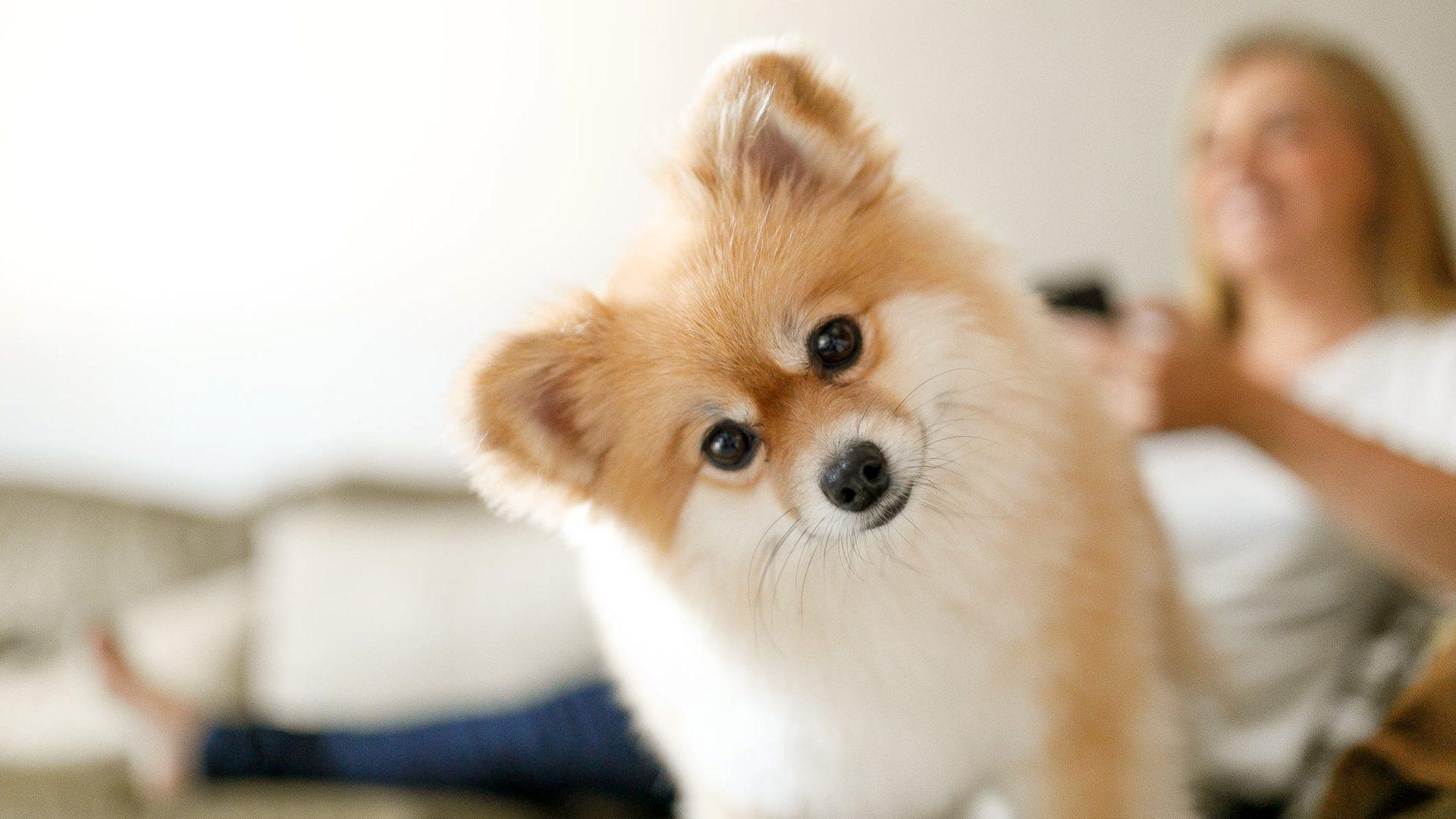 What Pet Owners Should Know About Pet Diabetes